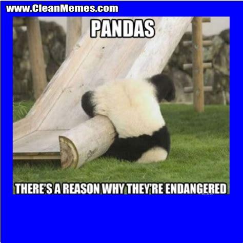 Funny Panda Memes - funny clean jokes memes