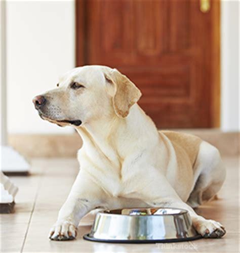 hypercalcemia in dogs hypercalcemia in dogs