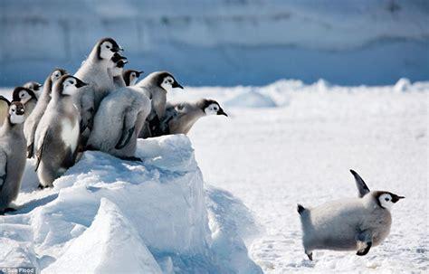 Nella Pinguin Set my favourite polaroids award winning arctic photographer