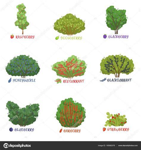 Nomi Di Arbusti E Cespugli by Nomi Di Garden Garden Ftempo