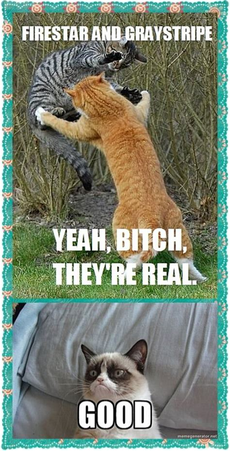 Warrior Cats Meme - warrior cat memes warrior cats and grumpy cats meme by