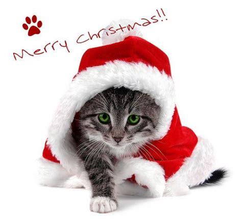 images of merry christmas kittens uncategorized animal love