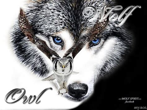 the wolf and owl wolf art pinterest