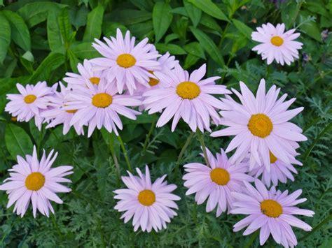 garten pflanzen reihenfolge alpinum