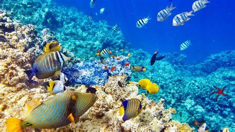 Wallpaper Hd Quality Underwater World Ocean Coral Reef ...