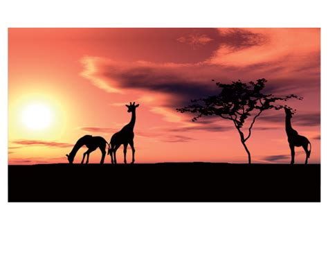 wallpaper for walls south africa photo wall mural african savannah 500x280 wallpaper wall