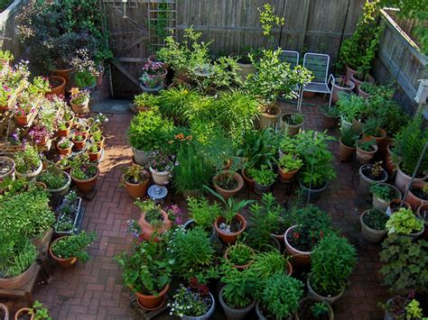 Container Gardening Ideas For Your Home Garden Gardening Ideas For