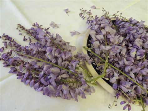 linguaggio fiori amicizia profumo di glicine fusilli tuttafirenze