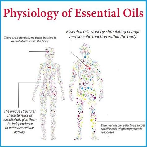 Essential Oils For Detox Brain by 17 Best Images About Essential Oils To Help Ease Addiction