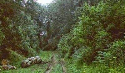 jumlah film chucky 5 hutan paling berhantu di dunia