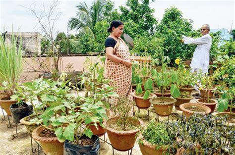 Kitchen Garden Kerala by Sow Seed To Beat Veggie Price Rise