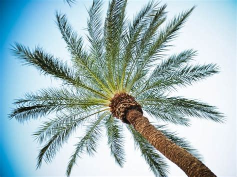 Bussines Opportunity On Palm Industry tapping business opportunities pakistan a key trading partner for malaysia the express tribune