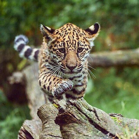 imagenes sensoriales y animicas espectaculares y hermosos animales salvajes taringa