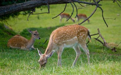 imagenes de animales naturales paisajes de animales naturales imagui