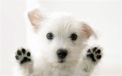cutest puppies in the whole world top 10 cutest puppies in the world