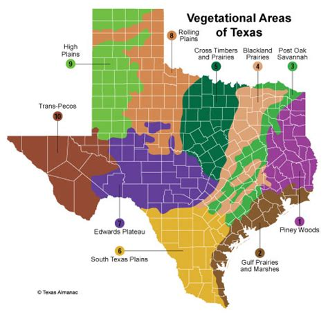 vegetation map of texas texas plant texas almanac