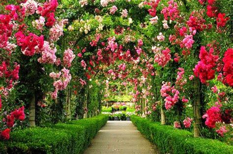 wallpaper bunga di taman gambar taman bunga yang cantik pernik dunia