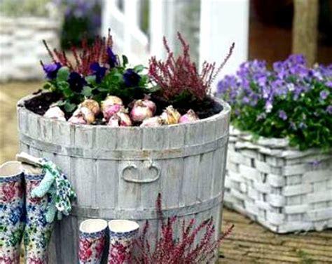 lada fioritura planting in containers