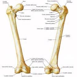 test di anatomia femore anatomia funzioni e muscoli in sintesi medicina