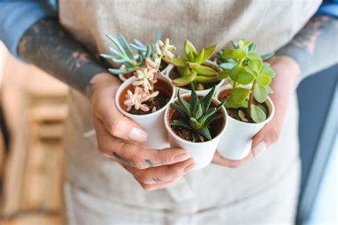 piante da appartamento come curarle piante grasse da appartamento come allevarle e quali