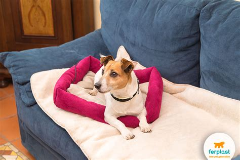 cuscino riscaldante cuscini e cucce riscaldanti per cani e gatti freddolosi