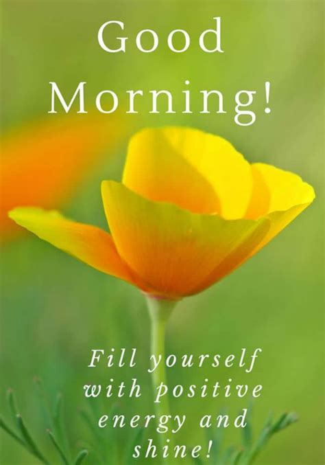 sweet and morning quotes and messages sweet morning messages for