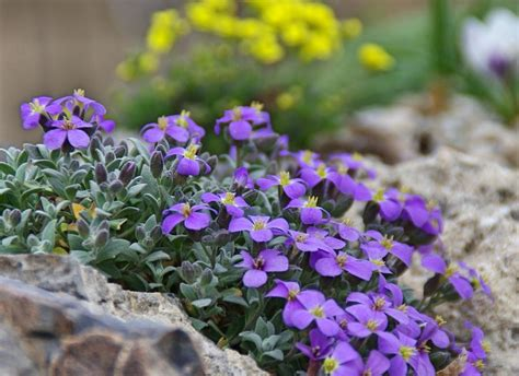 perennials forum early blooming perennials what are your favorites garden org
