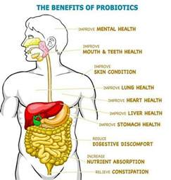What Is A Protonic Benefits Of Probiotics By High Country Kombucha On Fb