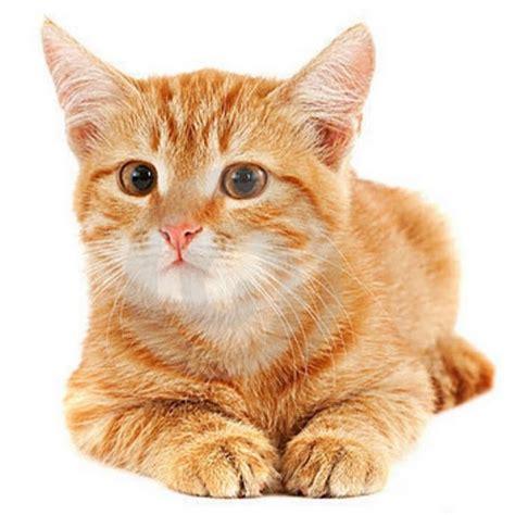 un gato y un 0735818355 mi gato youtube
