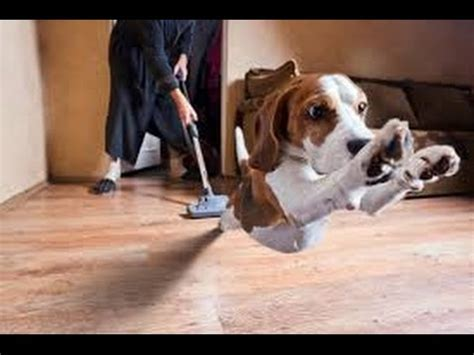 dog house vacuum cleaner video how dogs react to vacuum cleaners top dog tips