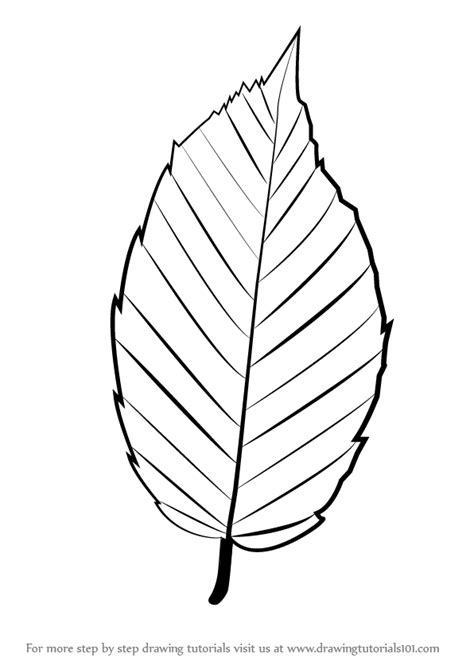 Drawing Leaves by Learn How To Draw A Leaf Plants Step By Step Drawing