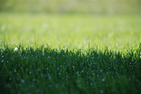 Erst Rasen Mähen Dann Vertikutieren by Rasenpflege Im M 228 Rz Unkraut Im Rasen Vernichten Bester