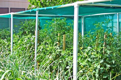 Pinterest Shade Cloth Vegetable Garden
