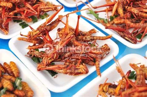 Would You Eat This Grasshopper Snack by Up Special Food Fried Grasshoppers Stock Photo