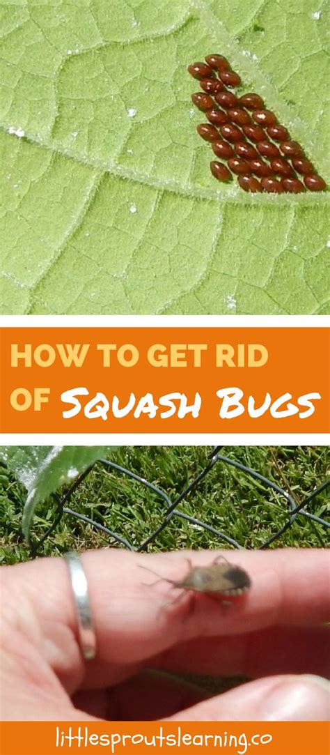 how to get rid of backyard bugs the 25 best garden bugs ideas on pinterest plant