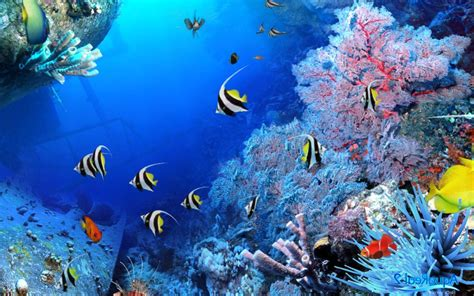 gambar wallpaper alam bawah laut pemandangan di bawah laut