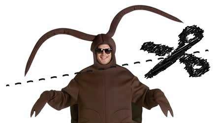 scarafaggio senza testa quando uno scarafaggio perde la testa