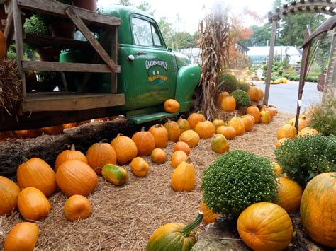 Garden Supply Company by Garden Supply Co Pumpkin Patch Garden Supply Co