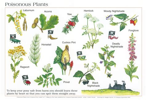 plants poisonous for humans bing images