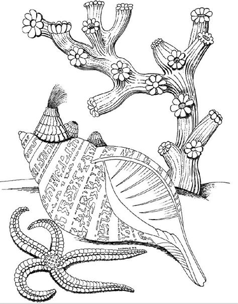 coloring pages for adults underwater kids under 7 underwater world coloring pages under