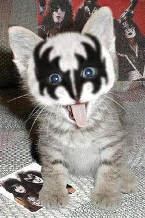 cat kiss wallpaper rock on you hip rock star cats you