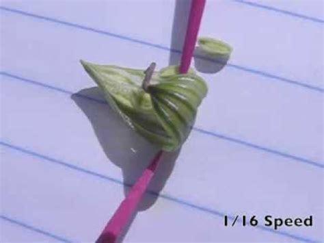 Biji Bunga Lotus Easy Plant exploding seed pods doovi