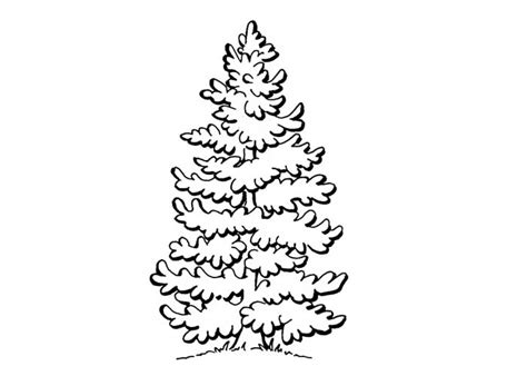 coloring page of pine trees ponderosa pine coloring page coloring pages