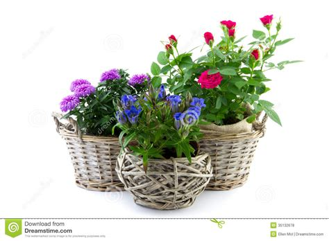Garden Flowers And Plants Garden Plant In Reed Basket Royalty Free Stock Photos Image 35132678