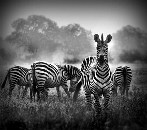beautiful black  white nature photography web design