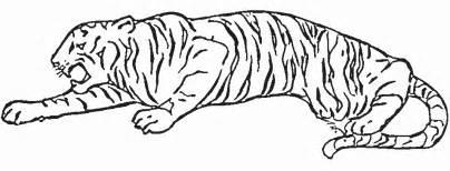 dessins de tigre 224 colorier