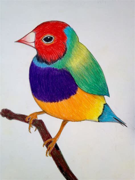 colorful bird colorful bird by helliatrix on deviantart