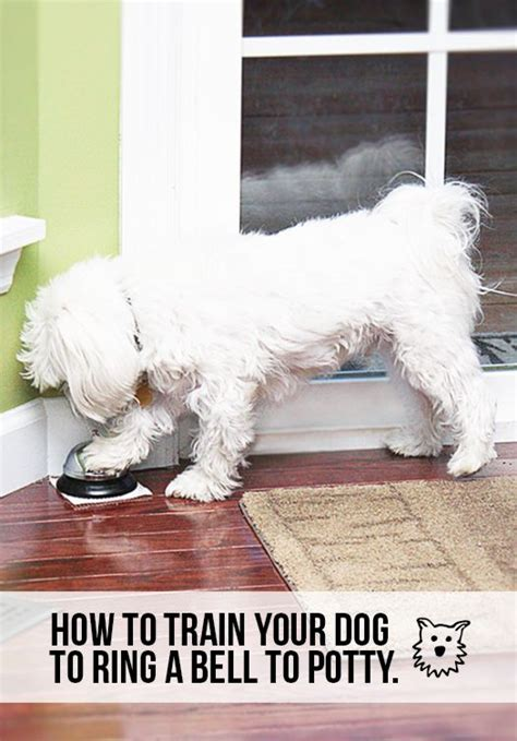 goldendoodle puppy feeding schedule best 25 how to puppies ideas on potty