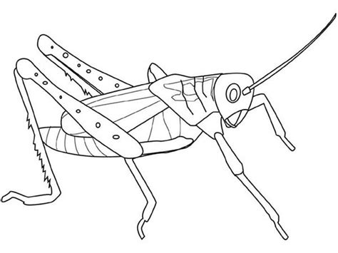 coloring page grasshopper grasshopper coloring page