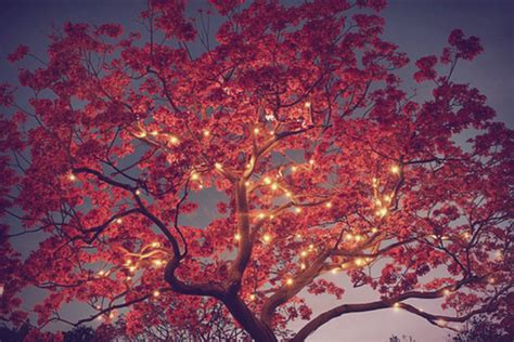 Twinkle Light Tree by Tree In Fall Image 1060425 By Nastty On Favim